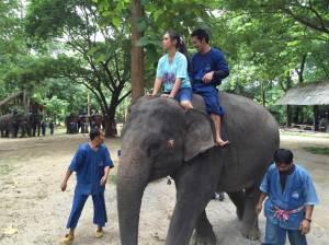 150924-natthanan-suko-riding-elephant-jpo-455a_1a520b9efc7ade46577a2d9825309fe9.nbcnews-ux-2880-1000