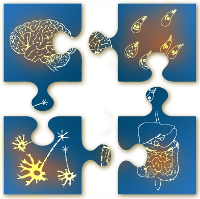 gut brain
